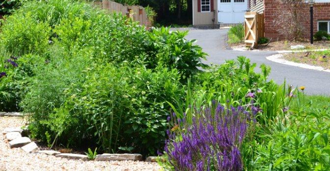 Rain Gardens | Ecologia Design / 240.344.5625 on coastal garden design, urban garden design, rural garden design, rain garden design,